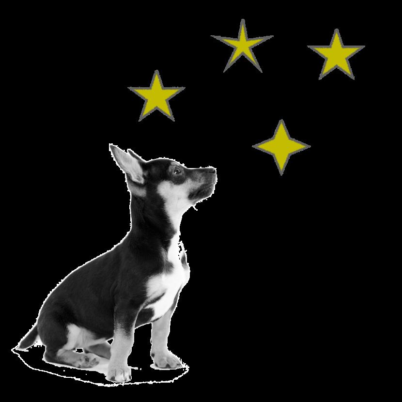 Cursos de educación canina Aranjuez