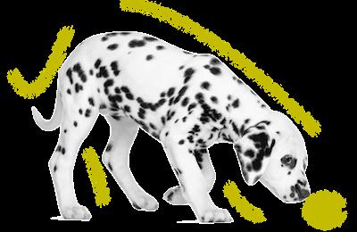 Escuela de Cachorros en Aranjuez