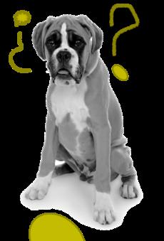 educación canina Aranjuez