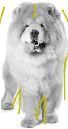 cursos educación canina Aranjuez