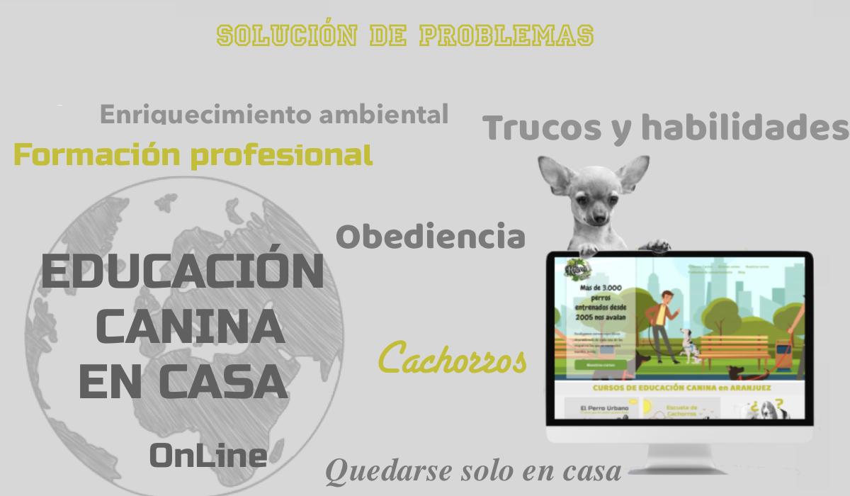 Educación canina online El Recreo Canino