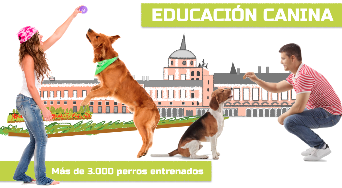 Adiestramiento Canino Aranjuez