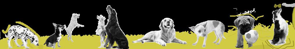 Adiestramiento de perros en Aranjuez
