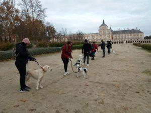 Adiestramiento Canino en Aranjuez